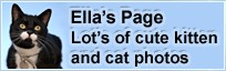 Ella's Page - Kitten photos and cat photos